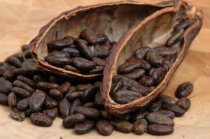 cacao-nibs-theobroma-cacao