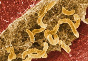 bacteries-biofilms